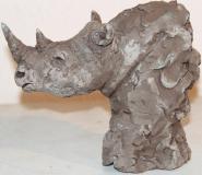 Rhinocéros 4